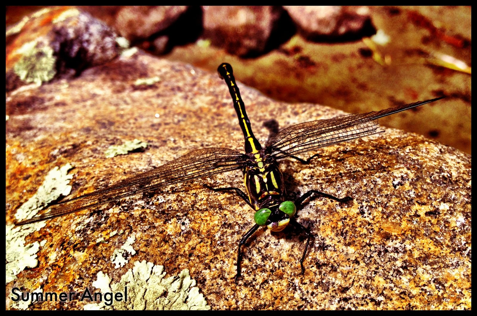Big Honkin' Dragonfly
