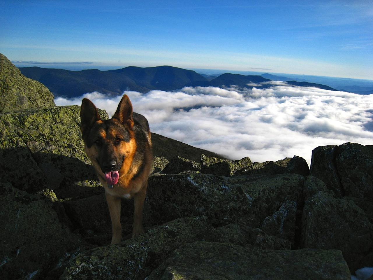 Ozzy Above The Clouds