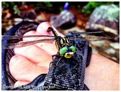 Dragonfly Podiatry