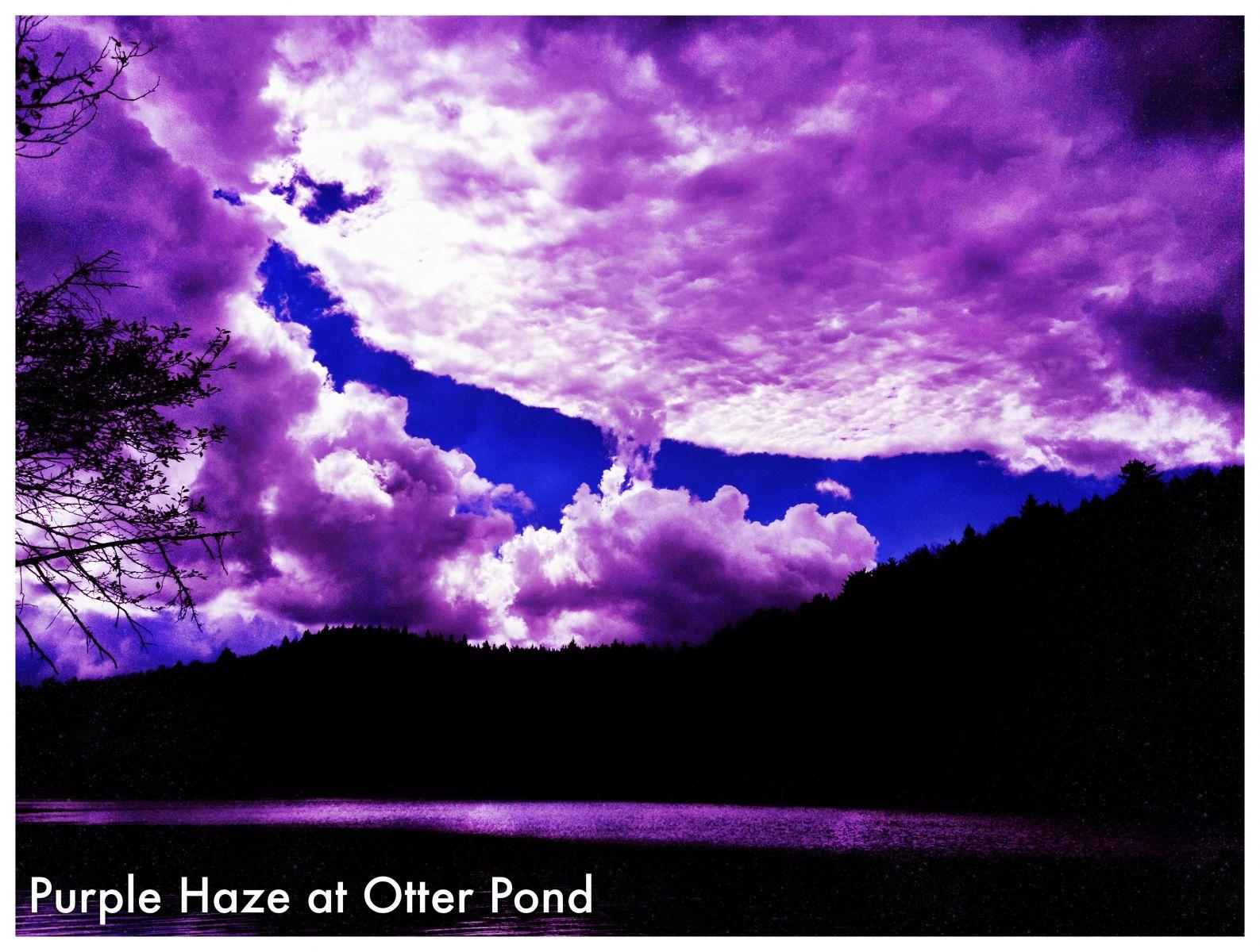 Purple Haze at Otter Pond