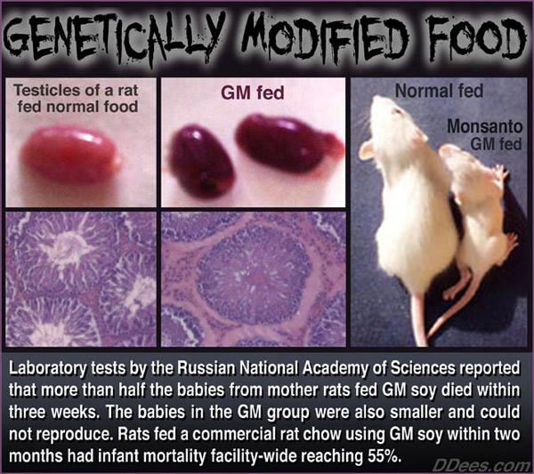 Your Gonads on GMO Food