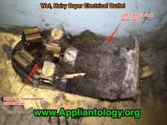 Hairy Wet Dryer Electrical Receptacle